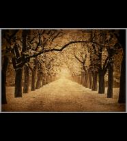 Disappearing Avenue: Landscape