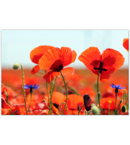 Red Poppies: Landscape
